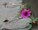 Flower Growing in a Crack